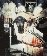 Abattoir 3