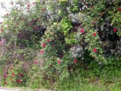 Flores nos Mendes