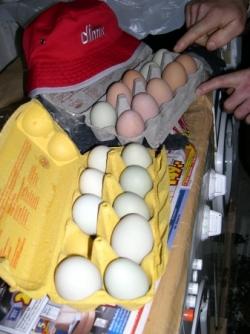 Quem disse que nao havia ovos verdes ??? VIVA A EC