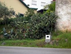 Cactus na Redinha