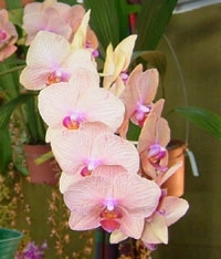 orchid10m.3