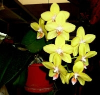 orchid14m.3