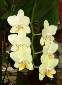 orchid15m.3