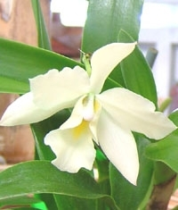 orchid_02m.3