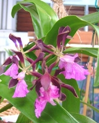 orchid_03m.3