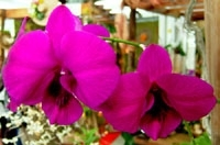 orchid_04m.3