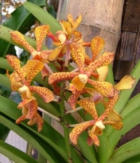 orchid_05m.3