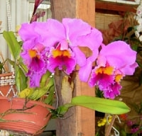 orchid_09m.3