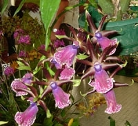 orchid_16m.3