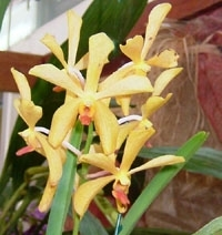 orchid_20m.3
