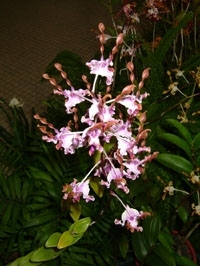 orchid_25m.3