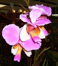 orchid_28m.3