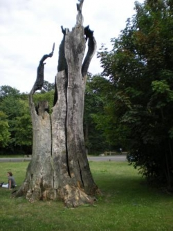 vétéran en forêt de Sénart