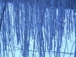 petit bois en hiver vallée du Haut-Giffre