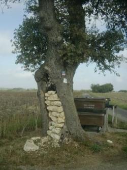 arbre creux et muré