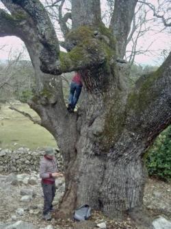 Photos d'arbres remarquables