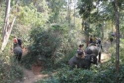 Balade à dos d'éléphants...