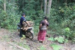 Voilà comment ils vont au bois ici :)