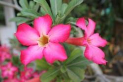des fleurs... :)