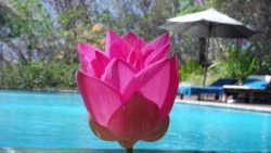 Lotus a l'Udayana Eco Lodge