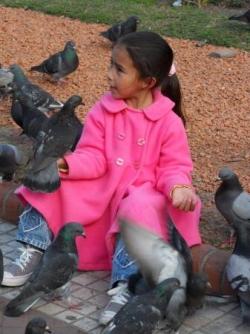 Notre Dame des pigeons