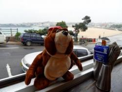 Norbert a Bondi Beach, sous la pluie, what a shame