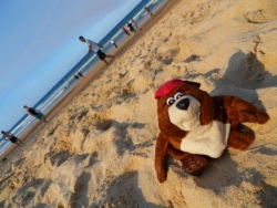 Norbert a Manly Beach