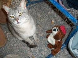 Norbert et un chat a Mendoza