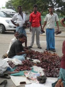 Chausseur de rue, Mamallapuram