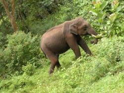 Elephant sauvage !
