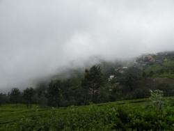 Plantations de thé, Coonoor