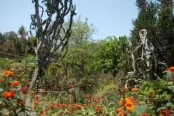 Argotti Botanical Garden - Floriana
