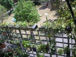 Expériences végétales 2012