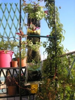 Jardin vertical - Nov11