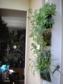 Jardin vertical - Juin11