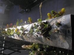 la rambarde végétale n°1 en février 2012