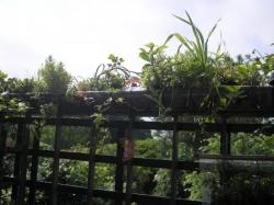 Ramarde n°1 en mai 2012