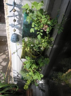Jardin vertical - avr11