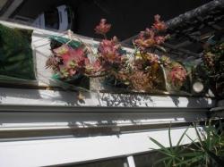 L'état du jardin vertical ce 16 mars 2010