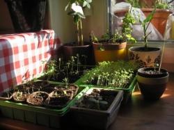 Expériences végétales 2010