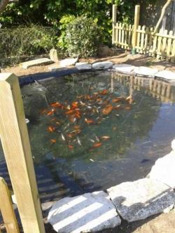 Réaménagement d'un bassin