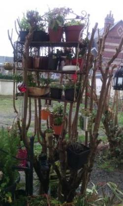 Une étagère dans un arbre