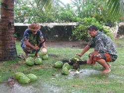 Au pied du cocotier