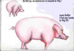 conchons_idiots